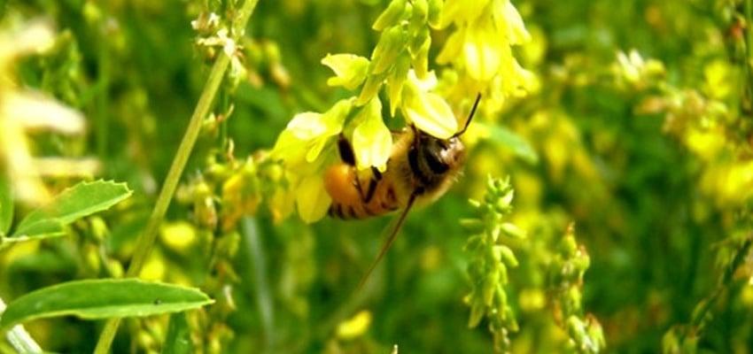 Beekeeper Mix