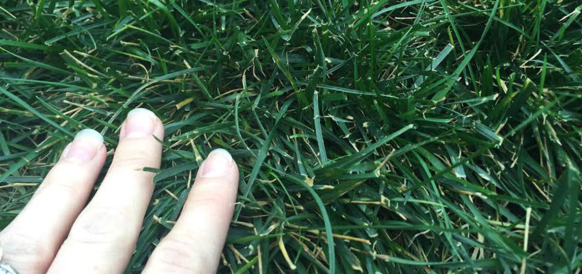 Image Result For When To Fertilize Gr