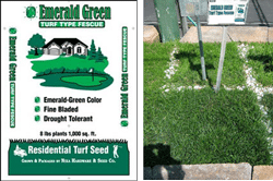Emerald-Green-Turf-Type-Tall-Fescue-Lawn-Grass-Seed