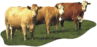 livestock-cattle-supplies