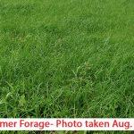 Teff-Grass-new