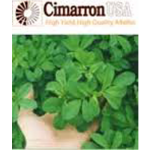 Cimarron-Alfalfa-Seed