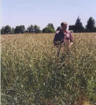 hulled_orchard_grass-showing_height